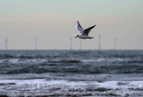 Energeia: 'Meewind wil burger betrekken en biedt met consortium ook op Hollandse Kust (zuid)'